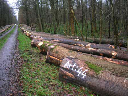 bois-bord-de-route-willerzie
